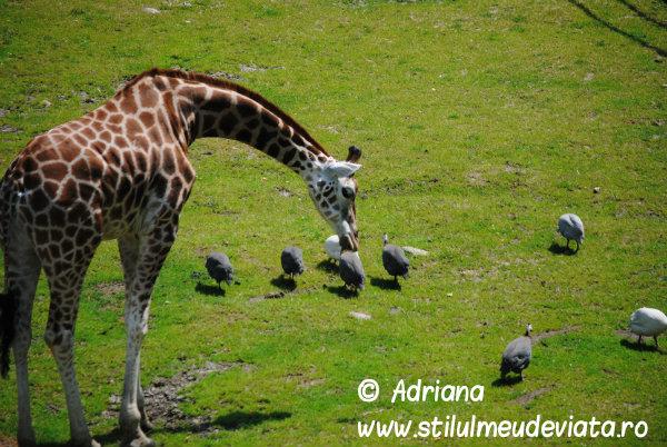 zoo nyiegyhaza (21)