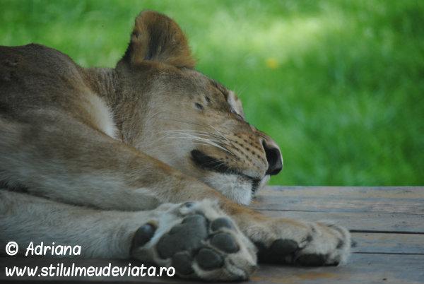 Gradina Zoologica din Nyiregyhaza