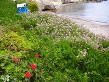 Agia Marina, insula Aegina, Grecia