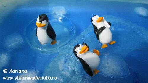 pinguinul, activitate senzoriala4