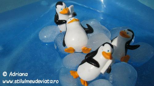 pinguinul, activitate senzoriala cu apa