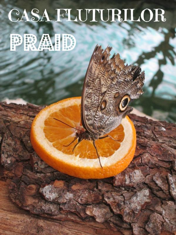 Casa Fluturilor Praid