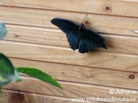 Casa Fluturilor din Praid