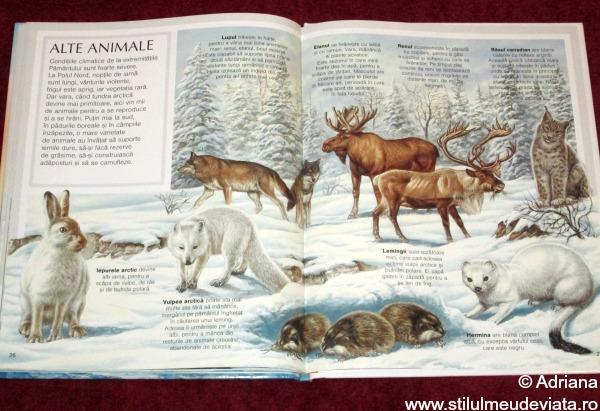 alte animale polare