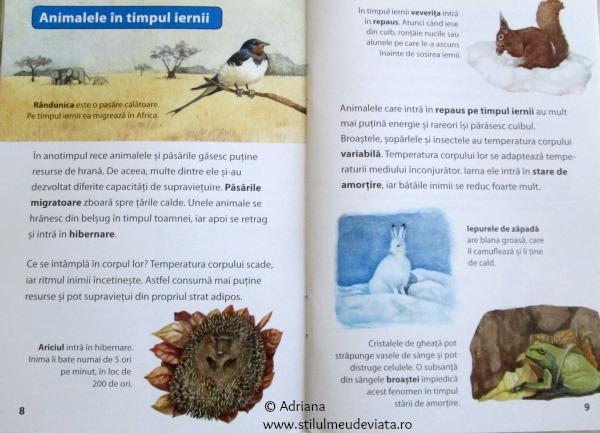 ce se intampla cu animalele pe timpul iernii?