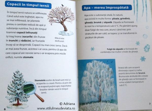 ce se intampla cu copacii pe timpul iernii?