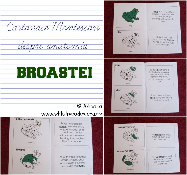 cartonase Montessori despre anatomia broastei