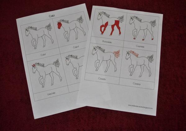 calul, cartonase montessori