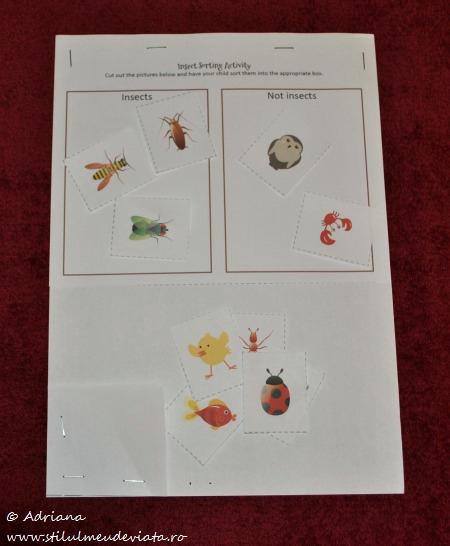 fisa de lucru - insecte sau alte animale