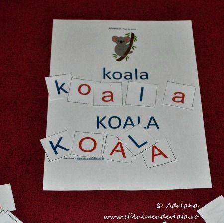 litera K, koala