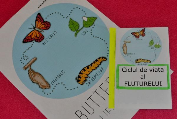 Ciclul de viata al FLUTURELUI (carticica)