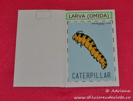 Ciclul de viata al fluturelui, LARVA