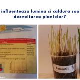 Experiment, soarele si dezvoltarea plantelor