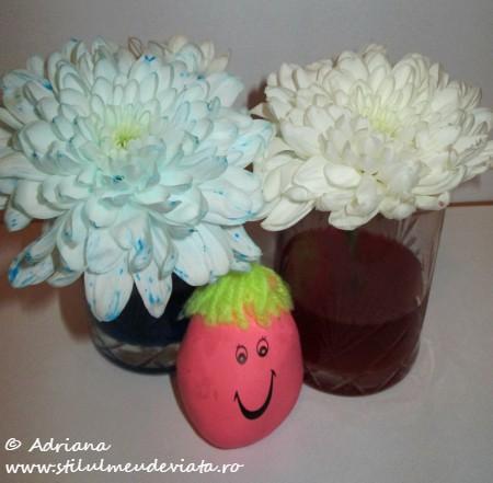 EXPERIMENT: Sa coloram flori!