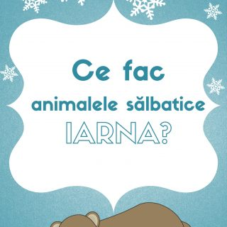 Ce fac animalele sălbatice în timpul iernii
