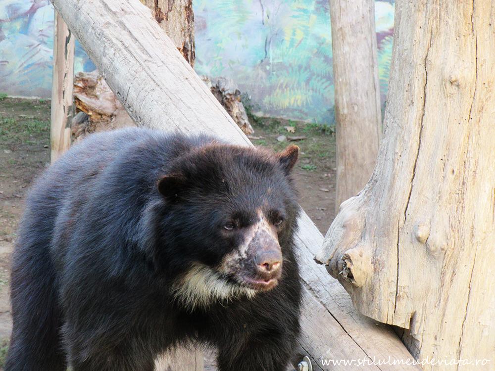 Zoo Nyiregyzaha